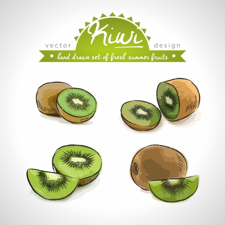 Kiwi. Vector Illustration Keywords: Isolated Standard-Bild - 123717724