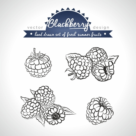 Blackberry. Set of fresh fruits, whole, half and bitten with leaf. Vector Illustration Keywords: Isolated on white background 向量圖像