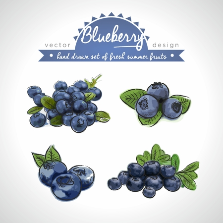 Blueberry. Vector Illustration Categories: Isolated