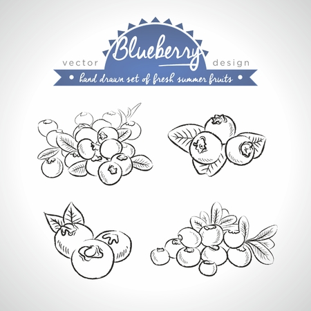 Blueberry Collection of fresh fruits with leaf. Vector Illustration Keywords: Isolated