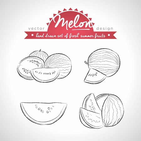 Melon. Set of fresh fruits, whole, half and bitten with leaf. Vector Illustration Keywords: Isolated on white background 向量圖像