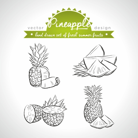 Pineapple Collection of fresh fruits with leaf. Vector Illustration Keywords: Isolated 向量圖像