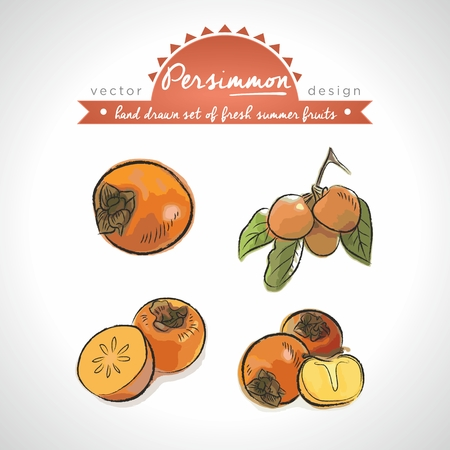Persimmon. Vector Illustration Categories: Isolated