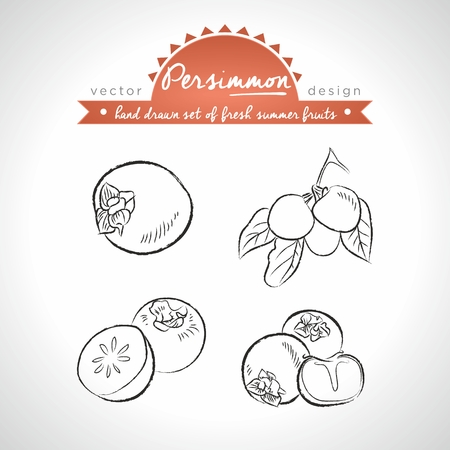 Kaki fruit Collection of fresh fruits with leaf. Vector Illustration Keywords: Isolated 向量圖像