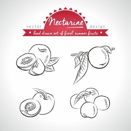 Nectarine Collection of fresh fruits with leaf. Vector Illustration Keywords: Isolated 向量圖像