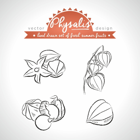 Physalis Collection of fresh fruits with leaf. Vector Illustration Keywords: Isolated Standard-Bild - 123717595