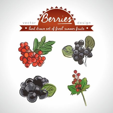 Rowan berry. Vector Illustration Categories: Isolated