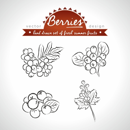 Rowan berry Collection of fresh fruits with leaf. Vector Illustration Keywords: Isolated