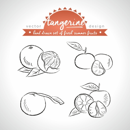 Tangerine Collection of fresh fruits with leaf. Vector Illustration Keywords: Isolated 向量圖像