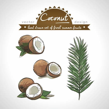 Coconut. Vector Illustration Categories: Isolated