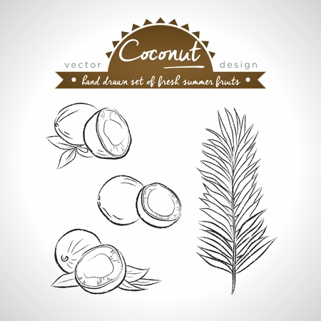 Coconut Collection of fresh fruits with leaf. Vector Illustration Keywords: Isolated Standard-Bild - 123717603