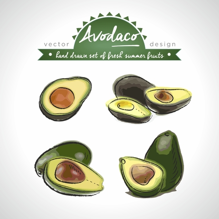 avocado. Vector Illustration Categories: Isolated