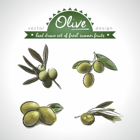 olive. Vector Illustration Categories: Isolated 向量圖像