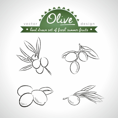 Olive Collection of Fresh Fruits with Leaf. Vector Illustration Keywords: Isolated