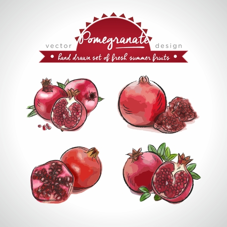 Pomegranate. Vector Illustration Categories: Isolated 向量圖像