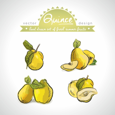 Quince Collection of fresh fruits with leaf. Vector Illustration Keywords: Isolated