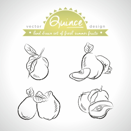 Apple-quince. Vector Illustration Categories: Isolated 向量圖像