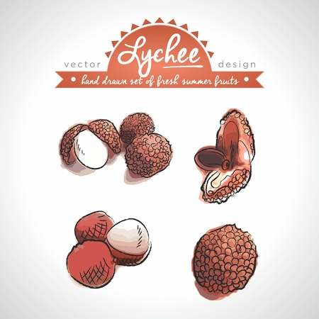 Lychee Collection of fresh fruits with leaf. Vector Illustration Keywords: Isolated