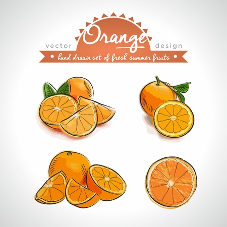 Orange. Vector Illustration Categories: Isolated