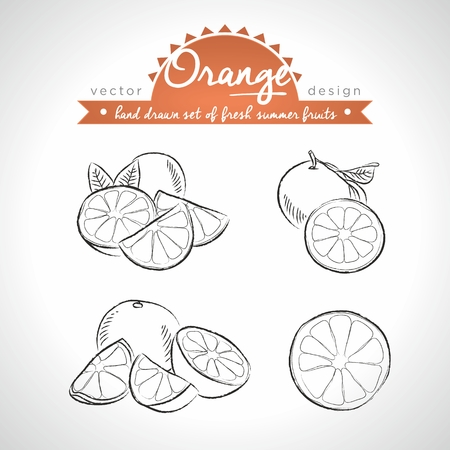 Orange Collection of Fresh Fruits with Leaf. Vector Illustration Keywords: Isolated Ilustração