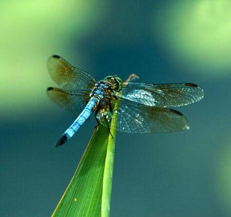dragon fly,close-up
