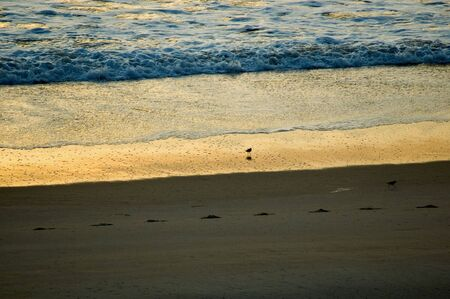 Vero beach with birds and footsteps photo