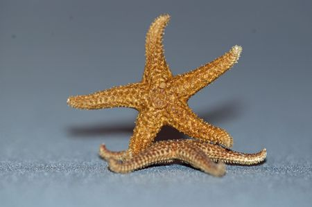 starfish on top of another