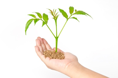 Growing green plant in a hand isolated on white background Stock Photo - 16258594
