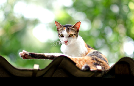 calico whiskers: Relaxed Calico Cat On The Roof