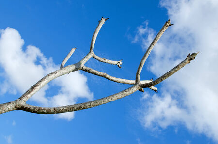 branch against the blue sky Stock Photo
