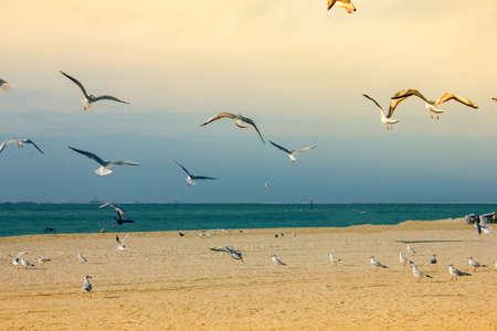 beautiful seagulls fly near the beach 版權商用圖片