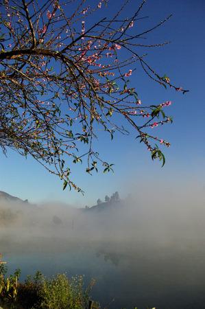 rosaceae: Rosaceae tree beside lake Stock Photo