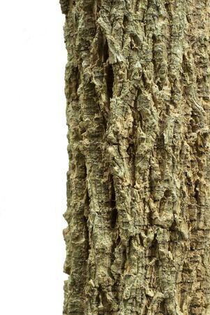 corkwood: Texture of  Cork tree Stock Photo