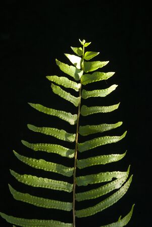 fern leaf: Fern leaf Stock Photo