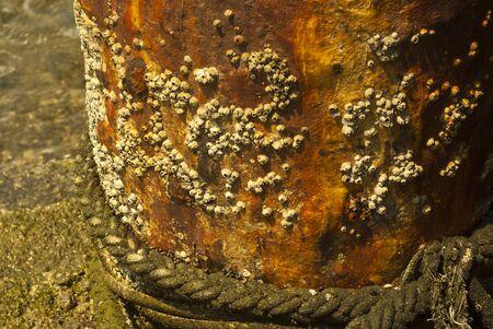 corrosion: Rock barnacle on corrosion pole Stock Photo