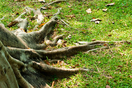 expand: Expand Roots of Banyan tree