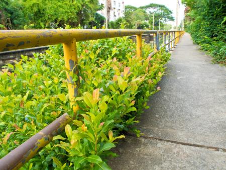 arbol de problemas: Manera de la caminata de concreto a lo largo del canal de drenaje Foto de archivo