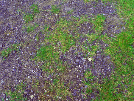 crushed: Texture of Crushed stone and grass Stock Photo