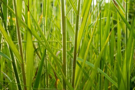 frescura: Freshness Grass blade in the countryside Foto de archivo