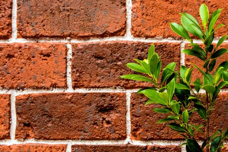 ornamental plant: Ornamental plant on the red brick wall Stock Photo