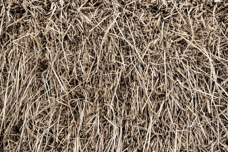 animal feed: Texture of piled dried straw for animal feed Stock Photo