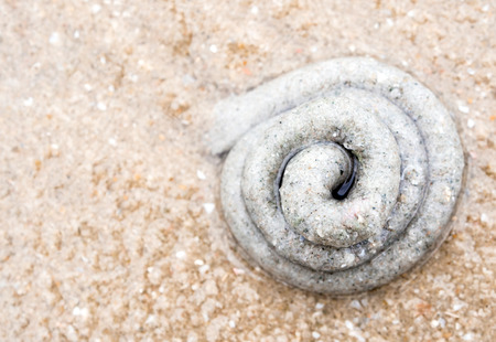 Pile of sand  on the beach from the excretion of lugworm
