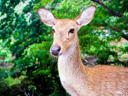Close up shot of young deer head