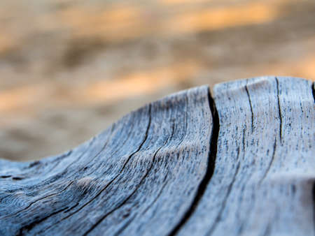 Close up to old stump surface texture of wood Stock Photo