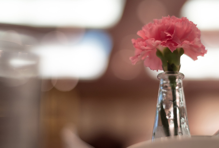 Pink Carnation Adorned In Thin Glass Vases Placed On A Dining