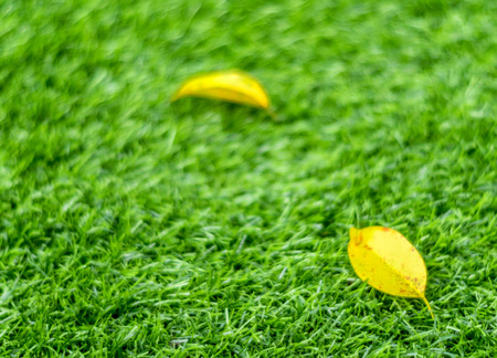 Texture of plastic artificial grass and the fall leaves by shallow depth of field