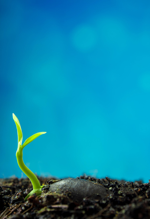 New life, leaves of young plant seeding in nature and blue background Stock Photo