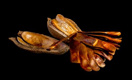 Hülsen und Samen von Honduras Mahagoni auf schwarzem Hintergrund Standard-Bild