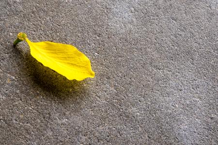 Yellow Petal of Golden shower (Ratchaphruek) flower on the concrete floor