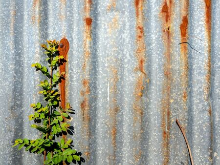 The galvanized steel fence rust and corrosion with weed in front Standard-Bild